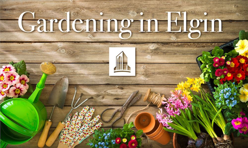 garden supplies on wood with Gardening in Elgin written
